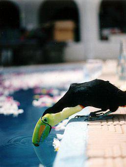 mascotas en la piscina